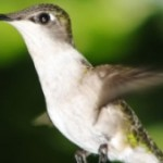 Google's Biggest Update in Years has Already Happened: Hummingbird